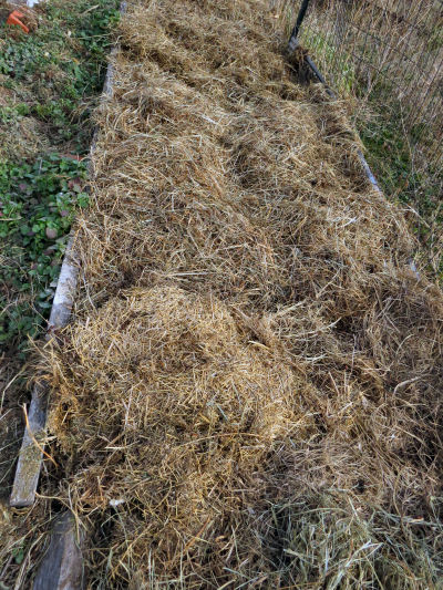 buying seeds for spring planting in a mulched bed