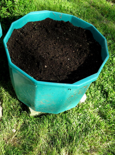filled container ready to plant