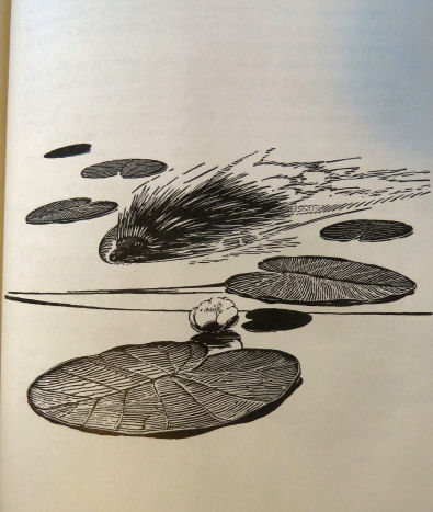 """porcupine swimming sketch from """"Canoe Country"""""""