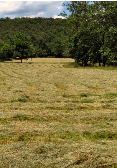 haying time begins with mowing