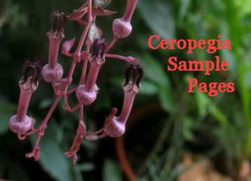 read sample pages from Discovering the Floral Biology of Ceropegia by Dr. Richard Rintz