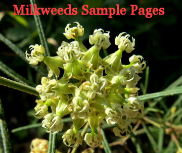 read sample pages from Missouri's Milkweeds, Milkvines & Pipevines by Dr. Richard Rintz