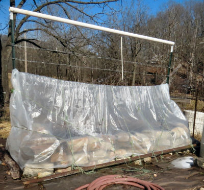 plastic over raised bed lengthens gardening season