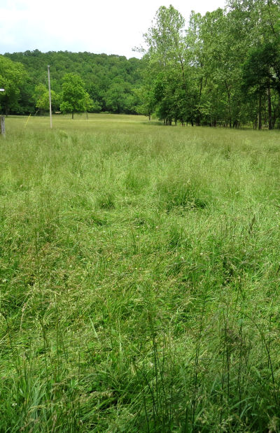 pasture expanse of grass seed bounty