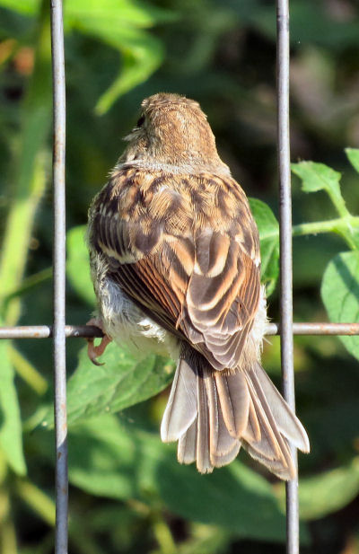 Count the sparrow's feathers