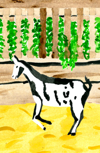"""word sounds abound in """"For Love of Goats"""""""